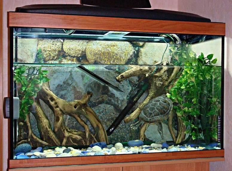 Красноухая черепаха содержание дома