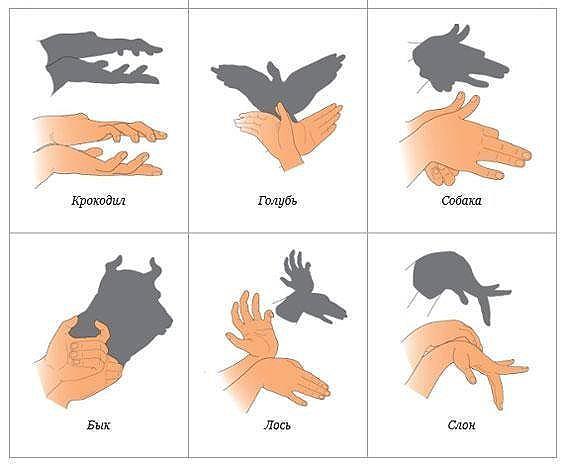 Как делать  тени животных